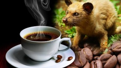 Photo of Kopi Luwak