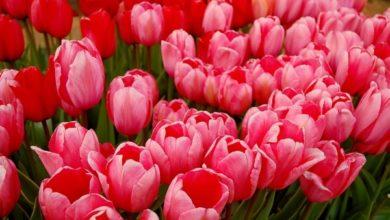 Photo of Kolor różowy