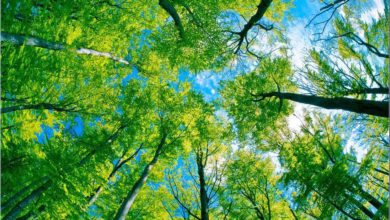 Photo of Kolor zielony