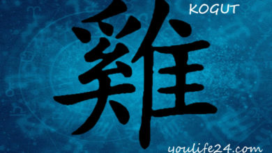 Photo of Kogut – osobowość i cechy charakterystyczne