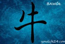 Photo of Bawół – osobowość i cechy charakterystyczne