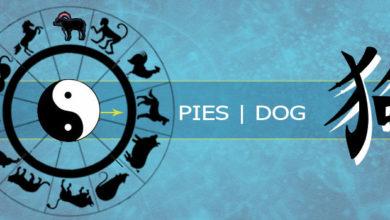 Photo of Pies – osobowość i cechy charakterystyczne
