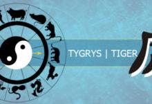 Photo of Jakim typem tygrysa jesteś?