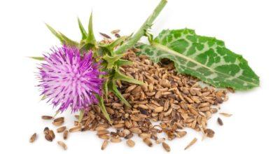 Photo of Zmielone nasiona ostropestu pomocne w odtruwaniu wątroby