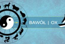 Photo of Bawół – przeznaczenie według daty urodzenia