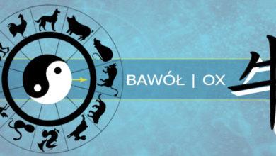 Photo of Osobowość Bawoła według zachodnich znaków astrologicznych