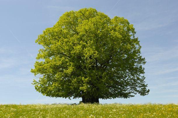 Magia Drzew. - Przytul Się Do Drzewa Niech Otoczy Cię Swoją Energią.