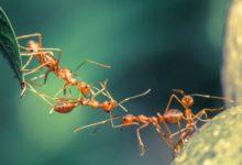 sen o mrówkach