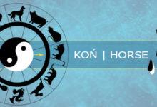 Koń - chiński zodiak