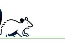 Photo of Osobowość Szczura według zachodnich znaków astrologicznych