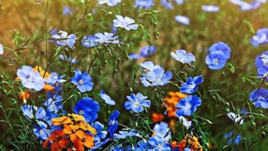 sennik kwiatki
