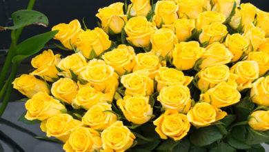sennik żółte róże